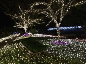 江ノ島,クリスマス,イルミネーション