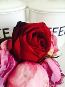 バラ,ROSE,花