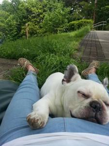 フレンチブルドッグ,駒沢公園,犬,愛犬,ブランド楽市,駒沢店