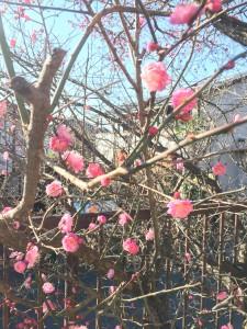 春,SPRiNG